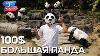 100$. Большая панда (Китай). Орёл и Решка. Чудеса света
