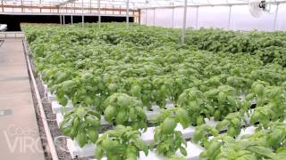 Smartbasil Farms in Suffolk, Virginia
