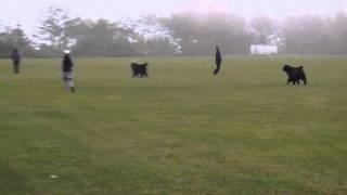 南極t大陸で有名になったタロウとジロウは樺太犬ですが 現在樺太犬はお...