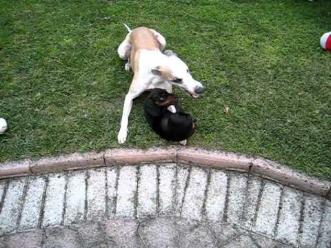 Tito e Maia