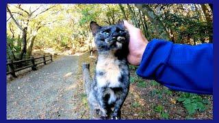 遊歩道で向こうから人懐っこいサビ猫が歩いてきた