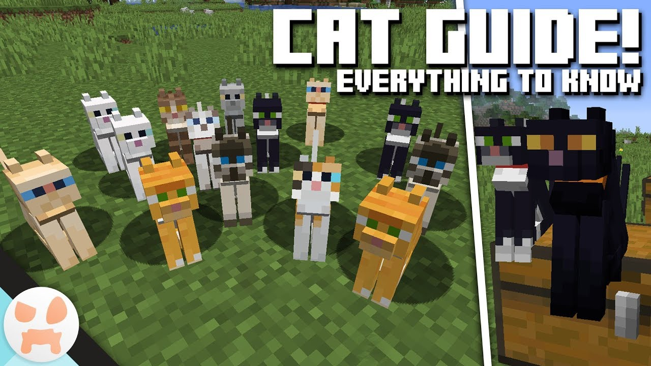 CAT GUIDE!  Cat Info & Variants Minecraft 8.84 - Village and Pillage