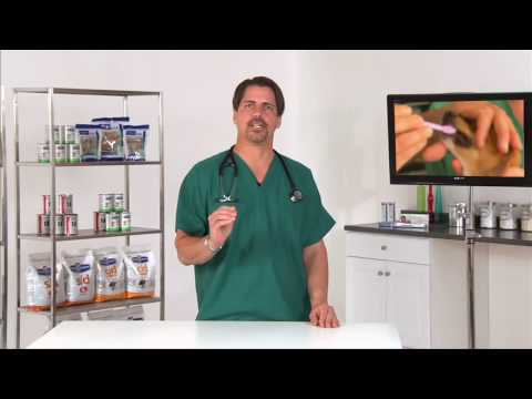 canine-dental:-taking-care-of-your-dog's-teeth---vetvid-episode-001
