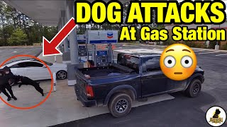 (MUST SEE) GIANT SCHNAUZER PROTECTION DOG FIGHTS MAN AT GAS STATION