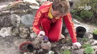 видео Альпийская горка своими руками