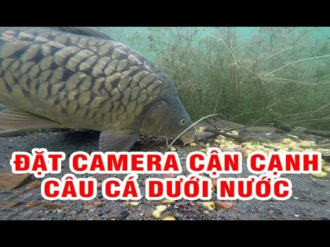 Đặt camera cận cạnh câu cá chép dưới nước