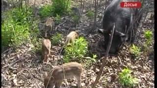 В Приморье утверждены новые правила охоты
