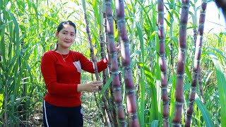 Sugarcane At Farm Cooking Fish Stew Recipe  Cooking With Sros