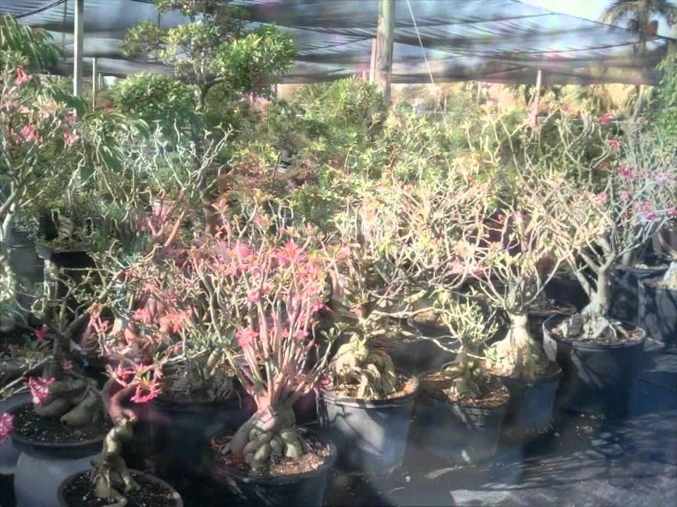 Oriental Nursery Farm Onf Miami Bonsai Plants Garden