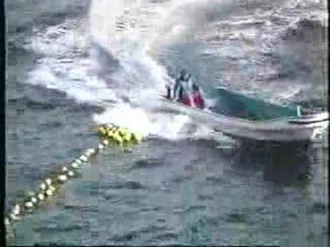 Sea Shepherd - Taiji Dolphin Campaign 2003