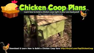 Chicken Coop With Wheels - Free Designs For Chicken Coops
