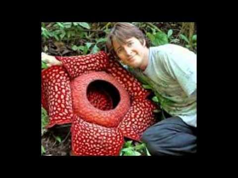 Las 18 flores mas hermosas del mundo youtube - Fotos de plantas bonitas ...