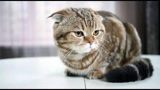 Цистит  у собак и кошек