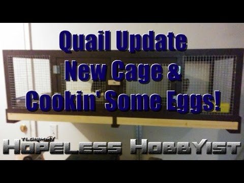 Quail Update: New Cage & Cookin' Some Eggs
