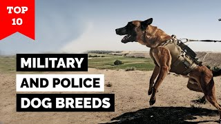 Top 10 Military And Police Dog Breeds In The World