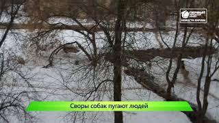 Отлов собак   Новости Кирова 21 03 2019