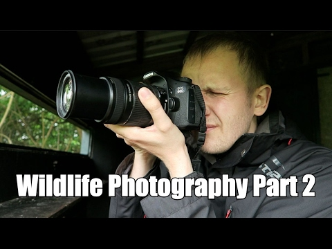 Budget Photography || Wildlife Photography Part 2... To Be Continued