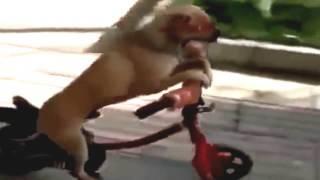 حيوانات ظريفة ولقطات مضحكة ورائعة