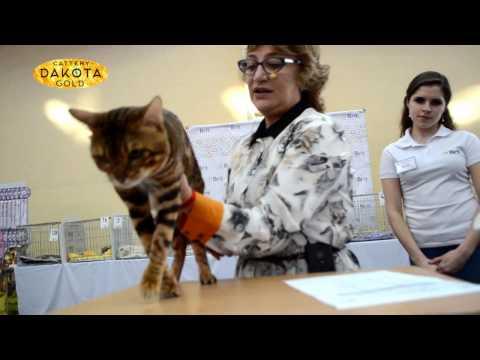Домашние животные, кошки и собаки различных пород на доске