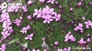 La flore du Svalbard