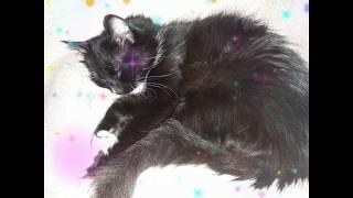 Мои красатулечки! Спящие коты./ My beauties! Sleeping cats. / Мої красуні! Сплячі коти.