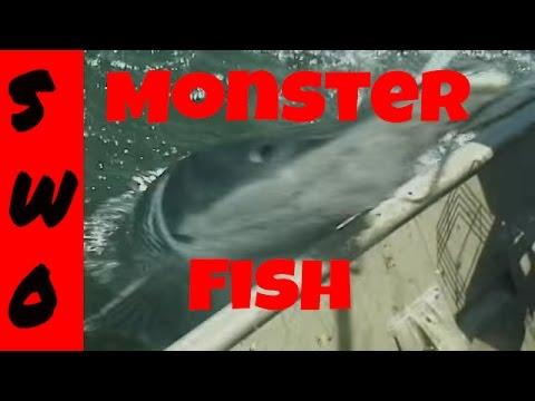 Bowfishing MONSTER Alligator Gar