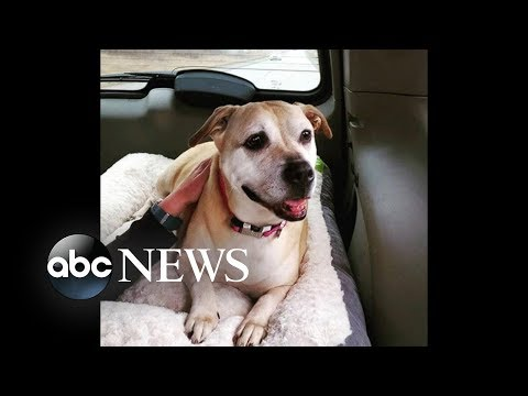 Shelter dog adopted after 7-year wait | ABC News