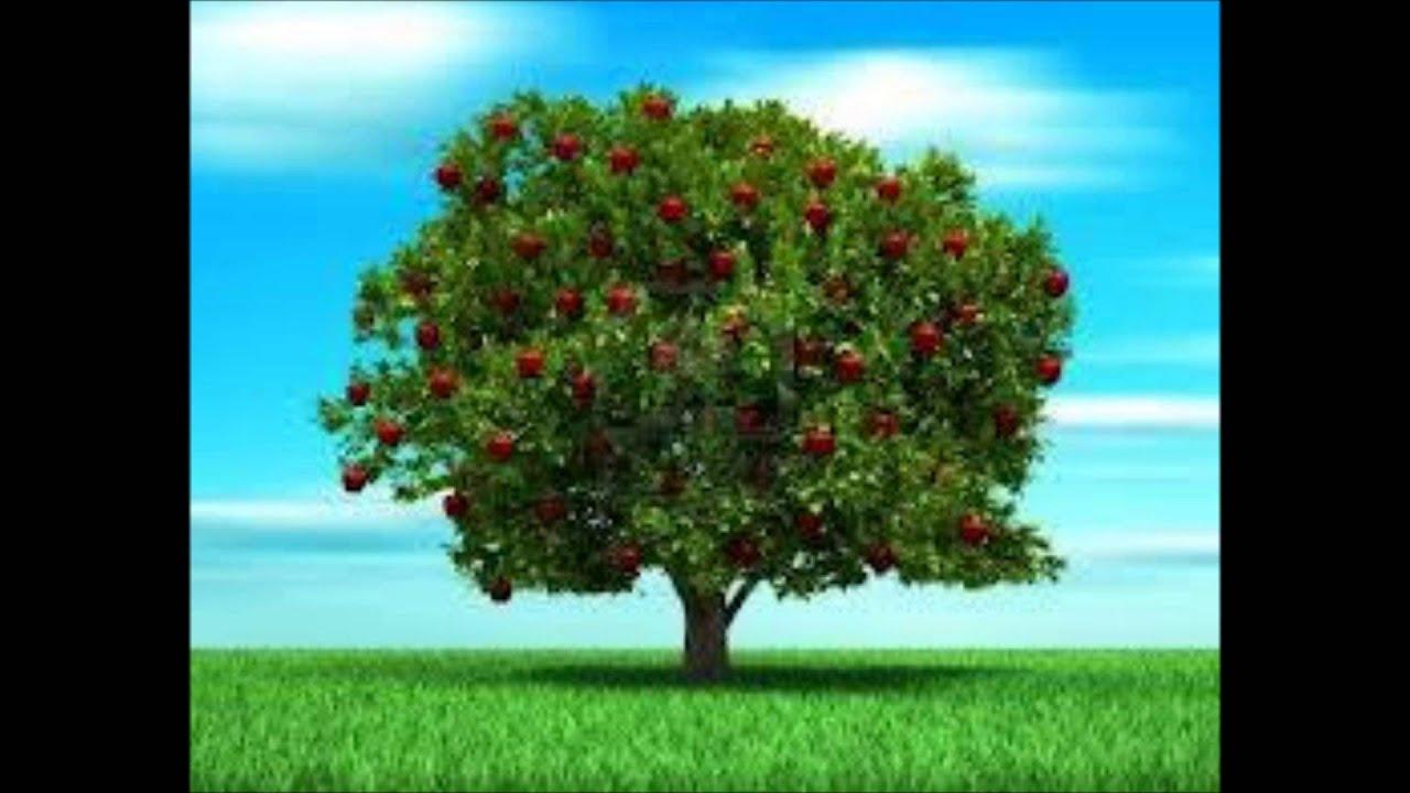La gloria de dios y los frutos de sus hijos youtube for Arbol con raices y frutos