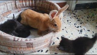 Котята Достали Кролика Кролик Жалуется Маме Кошке Смешные Коты Funny Kittens Funny Bunny