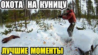 Охота на куницу зимой видеоролик