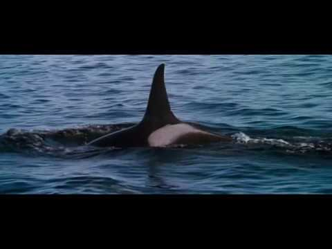 11 (1/2). End Credits (part 1/2) (Free Willy / 1993) Soundtrack