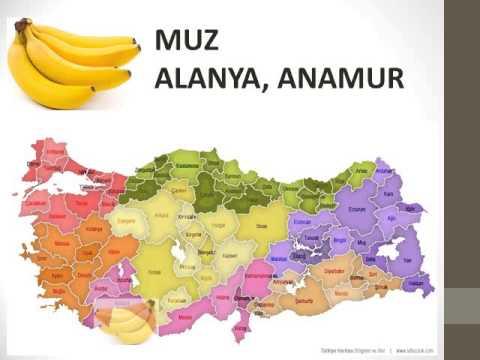 Türkiye De Ne Nerde Yetişir Youtube
