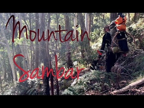 Backpack Hunting For Sambar Deer - Mountain Sambar
