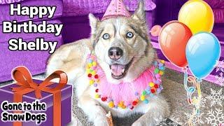 Happy Birthday Shelby the Husky 11th Birthday