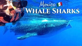 Swimming with Whale Sharks Cancun | Mexico is Open for Tourism