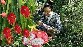 Cute Girl Eating Dragon Fruit Delicious, Eating Delicious Natural Life