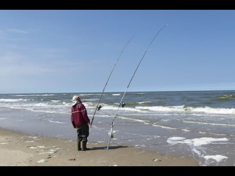 Hunting the giants 4 surf fishing southern california doovi for Surf fishing southern california