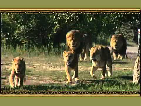 African Lion Safari 2010 TV Commercial