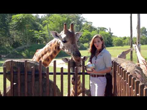 Rosie the giraffe shares her exciting news ahead of Mother's Day!