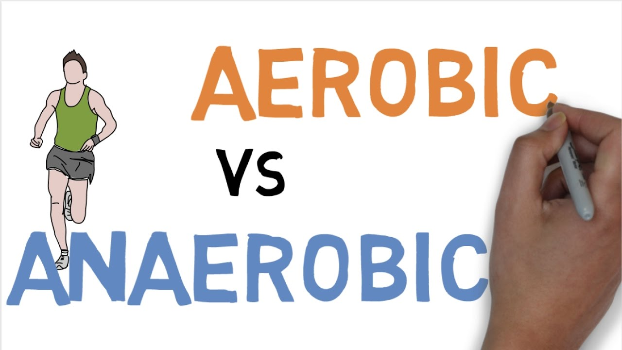 aerobic vs anaerobic exercise examples