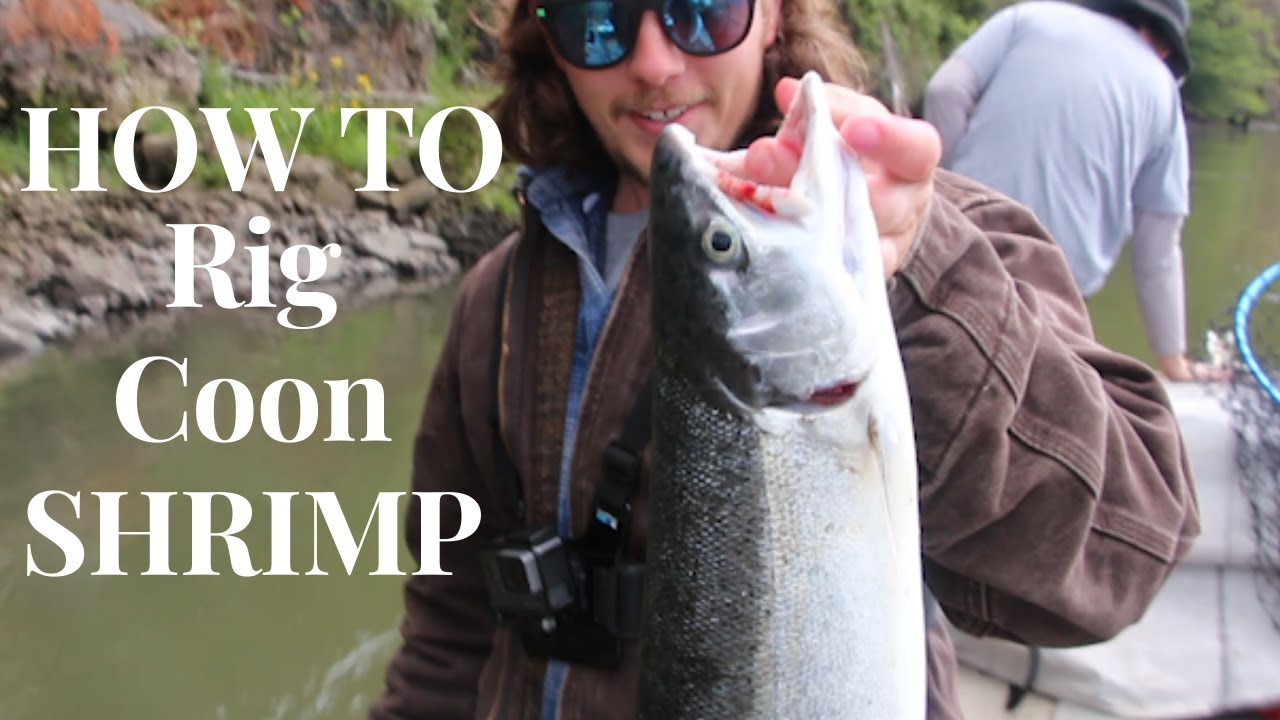 SWIFT Lower Columbia River Steelhead |* HOW TO Rig Coon Shrimp* June 6. 2020|