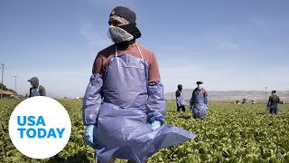 Farmworkers risk their health in order to pay the bills in Imperial County, California | USA TODAY