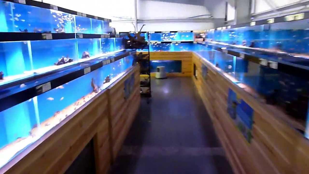 Cardiff maidenhead aquatics tropical fish store youtube for Exotic fish store