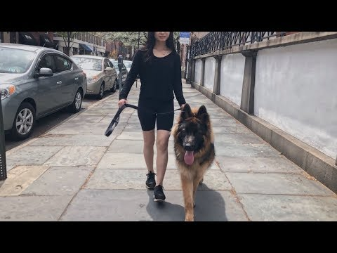 A Day Out with My German Shepherd