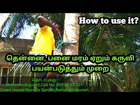 பயன்படுத்தும் முறை, தென்னை, பனை மரம் ஏறும் கருவி? coconut ...