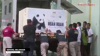 Bye-bye, Nuan-Nuan: Msian-born panda leaves for new home in China