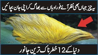 12 Dangerous Animals of The World in Urdu Hindi - Discover The World