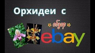 Орхидеи с ebay. Открываем посылку.