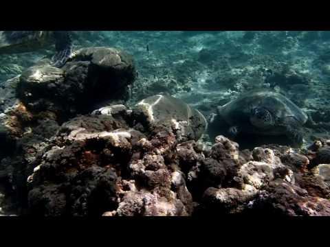 Snorkeling Anini Beach, Kauai 1 17 17