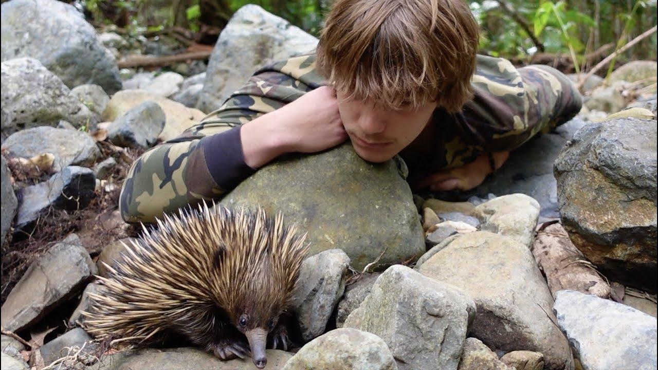 Venomous SNAKES & LIZARDS of AUSTRALIA! (Echidna Encounter)